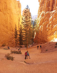 2-Day National Parks Tour Bryce Zion Canyon