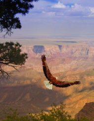 Grand canyon West Bus Tour