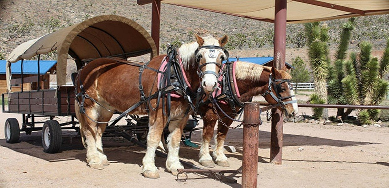 Grand Canyon Western Ranch Adventure Day Tour