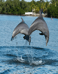 Dolphin Encounter Boat Ride in Clearwater Beach