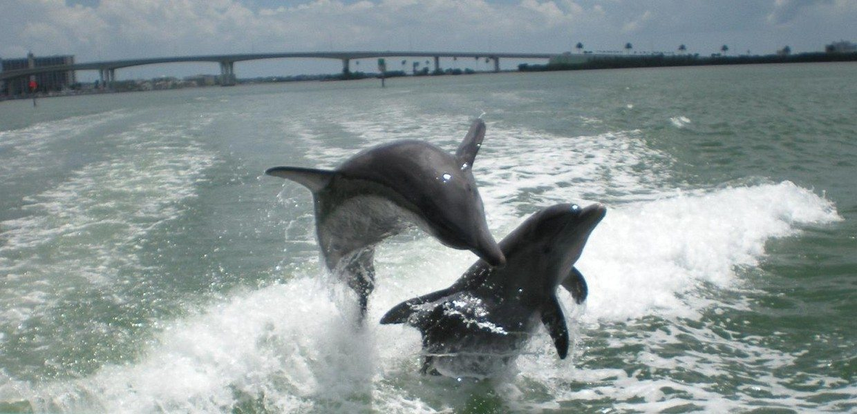 The Tour Exchange Dolphin Encounter Boat Ride Clearwater Beach