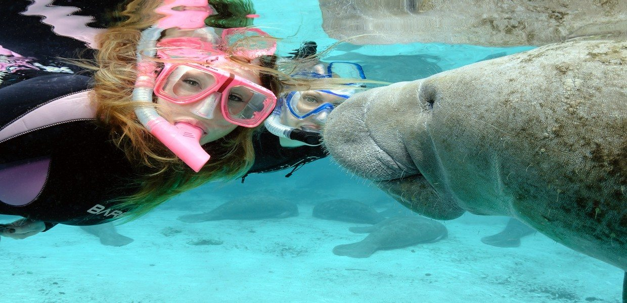 The Tour Exchange Snorkel Swim With Manatees at Crystal River