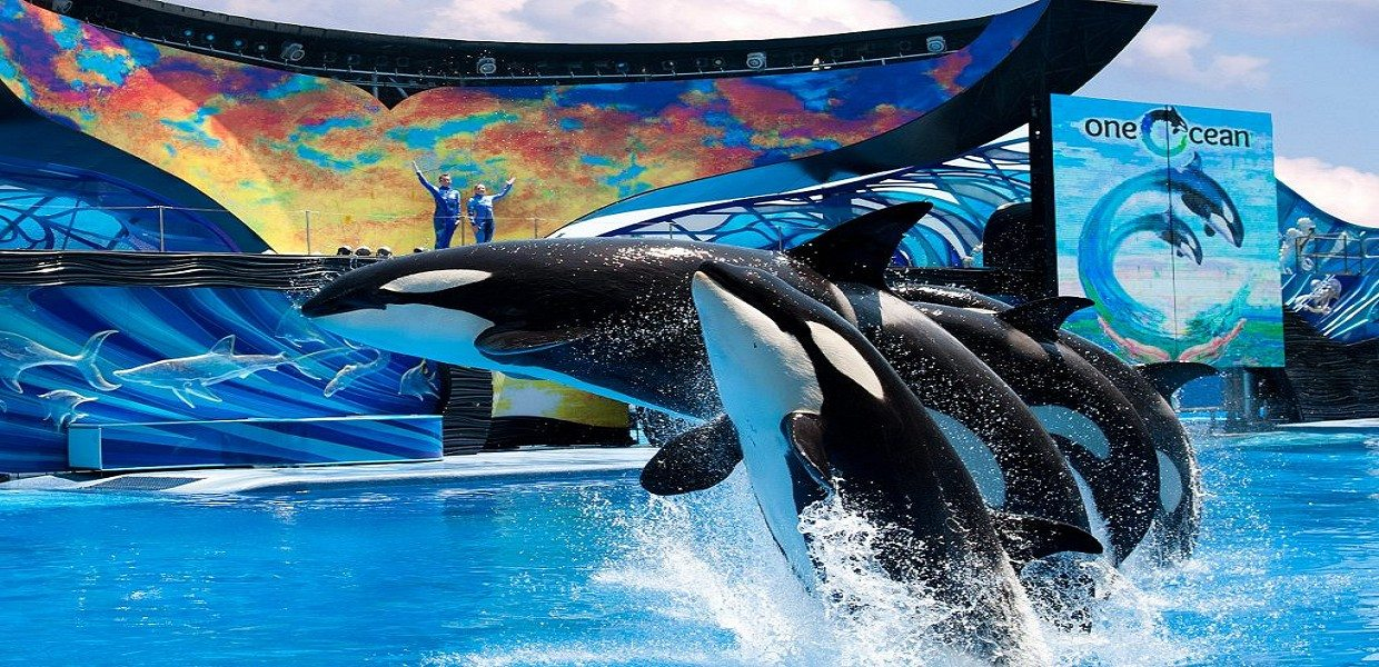 The Tour Exchange SeaWorld Orlando Tickets
