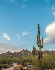 Phoenix & Scottsdale City Half-Day Tours
