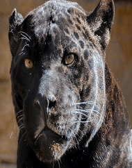 Bearizona Wildlife Park Admission Ticket Packages