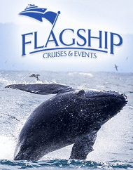 Flagship San Diego Whale Watching Tour Packages