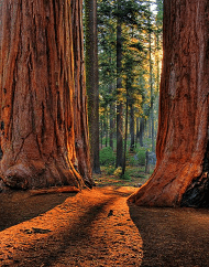 Extranomical Tours Redwoods Plus Wine Country Escape
