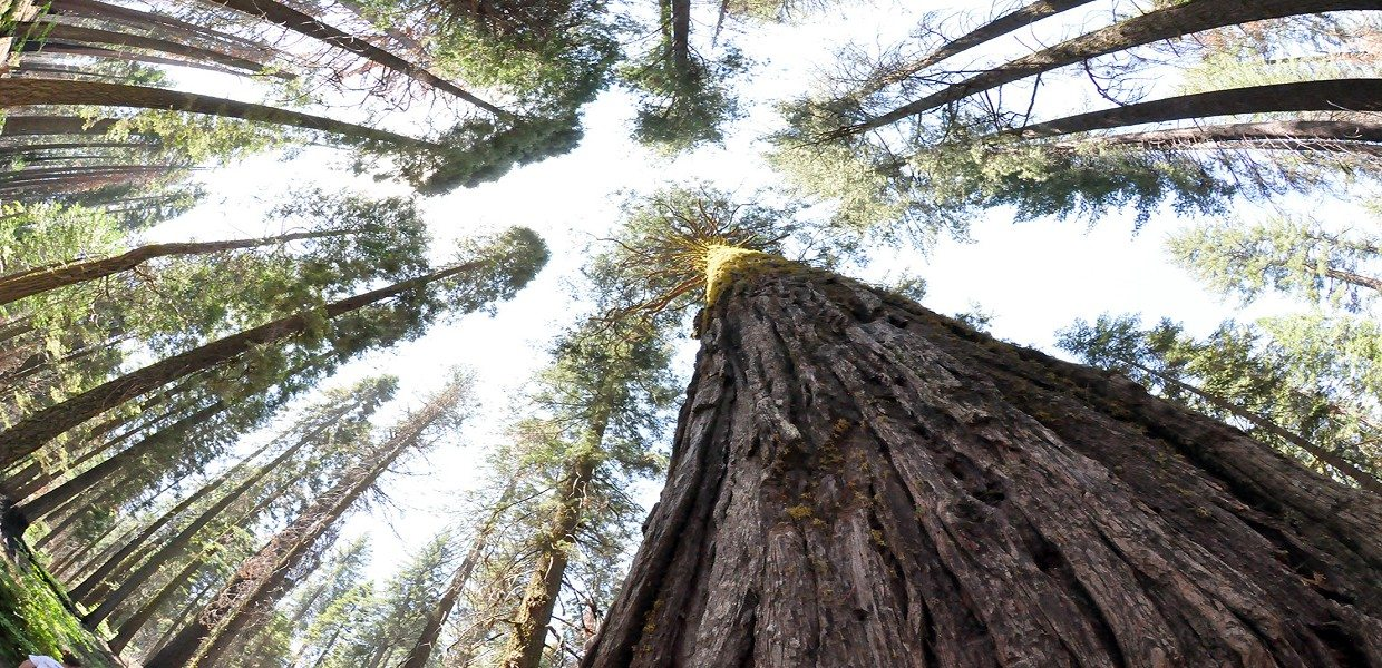 The Tour Exchange Extranomical Tours Redwoods Plus Wine Country Escape Day Trip