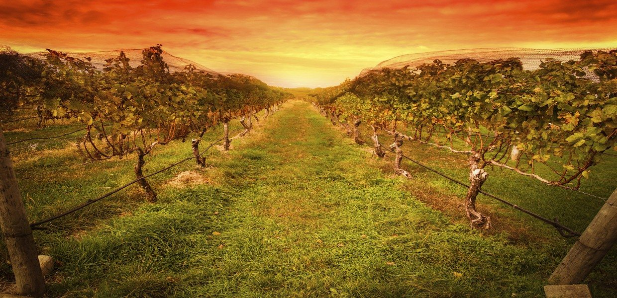 The Tour Exchange Extranomical Tours Redwoods & Wine Country Escape